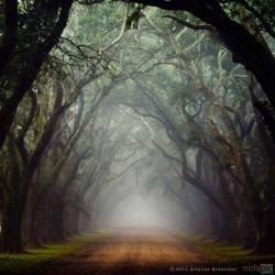 hollow sung by Kaustav Mitra